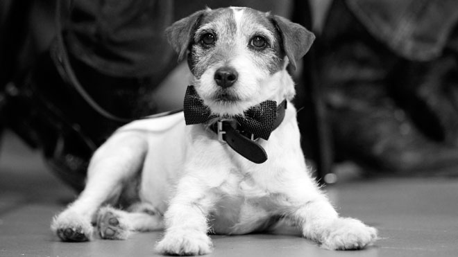 Uggie-the-dog-BW.jpg