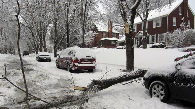 winter storm, broken tree, snow storm